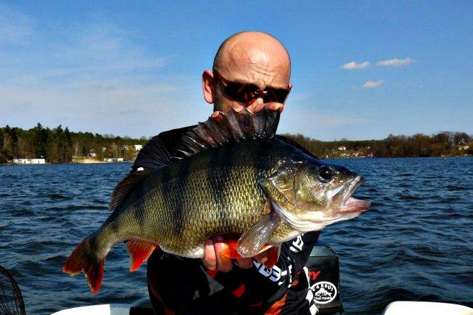 50 centymetrowy okoń z jeziora Lubiąż