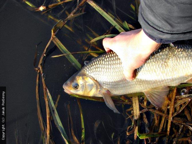 wypuszczajmy złowione ryby